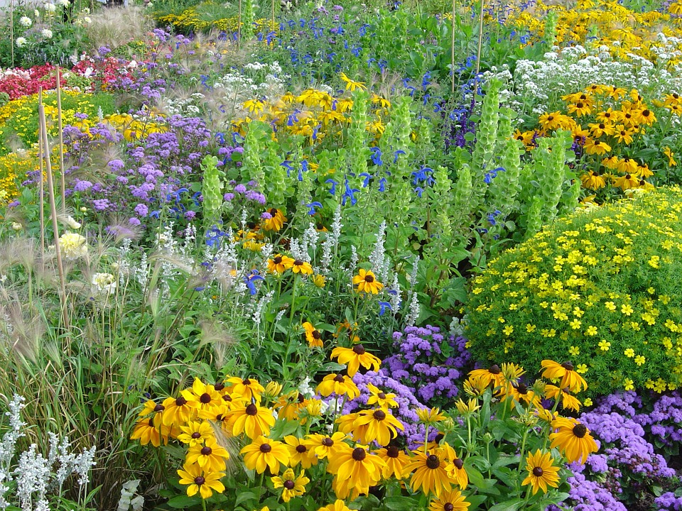 A faire au jardin en juin - Jardin d\'ornement