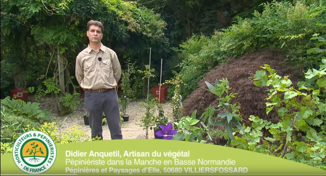 Comment Planter Une Vigne Grimpante comment planter vos grimpantes : clématite, glycine,