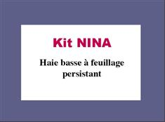 Kit NINA: Haie basse à feuillage persistant